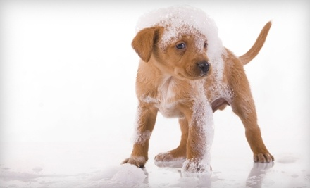 Pooches Dog Wash & Grooming - Pooches Dog Wash & Grooming in Wyoming