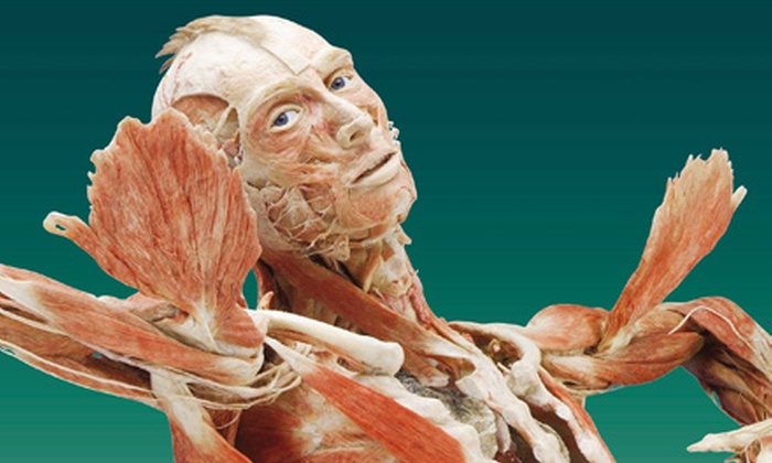 BODY WORLDS Vital - MLK Park: $9 to See BODY WORLDS Vital at the Buffalo Museum of Science, Monday–Friday through September 29 (Up to $17 Value)