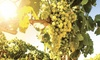 Journée découverte en Champagne