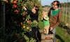 Union Orchard - Union: Cider Slushies, Apple-Spice Donuts, Wagon Rides, and Pumpkins for Two or Four at Union Orchard (Up to 58% Off)