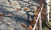 59% Off Gutter Cleaning