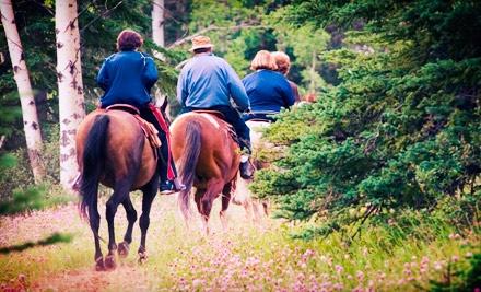 Horseback Trail Ride Wild Rose Equine Center Groupon