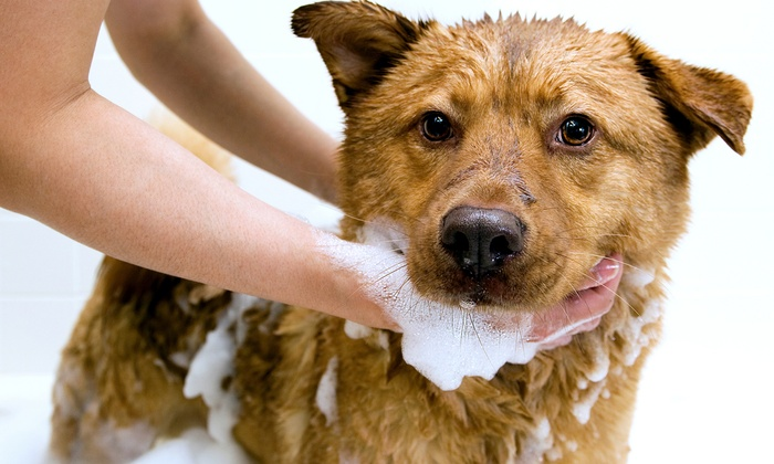 Modern Dog Boston - St. Marks: One or Three Self-Serve Dog Washes and Professional Nail Clippings at Modern Dog Boston (Up to 58% Off)