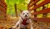 Pet Love Photography - Cincinnati: 60-Minute Pet Photo Shoot from Pet Love Photography (50% Off)