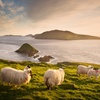✈ Ireland Trip with B&B and Hotel Stays; Includes Air and Rental Car
