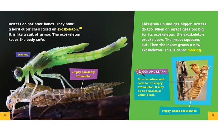 Pbs Kids Look Amp Learn Birds Or Insects Nature Exploration