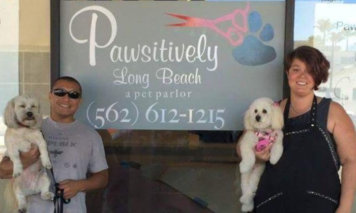 Pawsitively Long Beach - Downtown Long Beach: $17 for $30 Worth of Pet Grooming — Pawsitively Long Beach