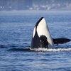 46% Off Whale-Watching Trip