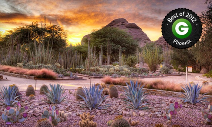Desert botanical garden in phoenix az groupon - Chihuly garden and glass groupon ...