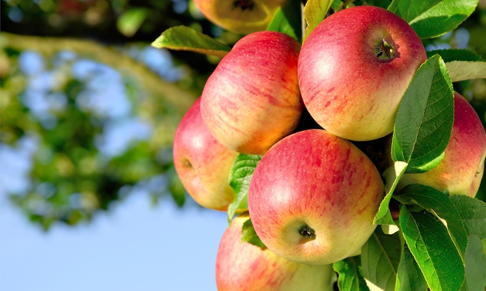 Wright's Farm - Gardiner: Apple Picking for Two, Four, or Up to Six at Wright's Farm (Up to 40% Off)