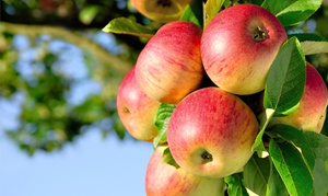 Mayer's Cider Mill Inc.: $19 for a Harvest Package with Pumpkins, Apples, and Donuts from Mayer's Cider Mill Inc. ($28.94 Value)