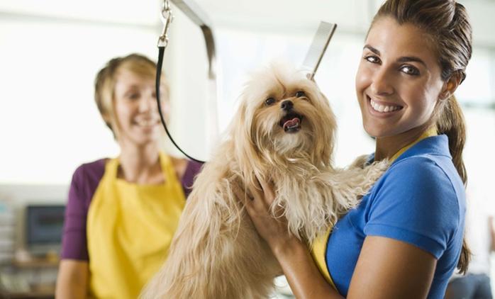 Formation pour apprendre à toiletter son chien comme un professionnel avec Holly and Hugo à 19 € (89 % de réduction)