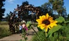 UC Davis Arboretum and Public Garden - University of California Davis: $29 for a One-Year Family Membership to UC Davis Arboretum and Public Garden Friends Group ($60 Value)