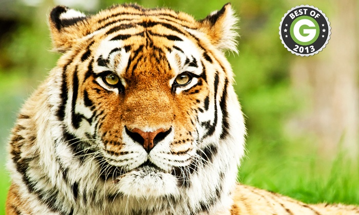 Paradise Wildlife Park - Broxbourne: Paradise Wildlife Park: Child (£6.50) or Adult (£8) Tickets (Up to 57% Off)