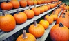 Apple Ridge Orchards - Warwick: Pumpkin Picking, Hayrides, Cider, and Donuts for Two, Four, or Six at Apple Ridge Orchards (Up to 58% Off)