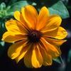 Up to 44% Off Botanical-Garden Visit