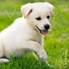 Up to 51% Off Dog Grooming