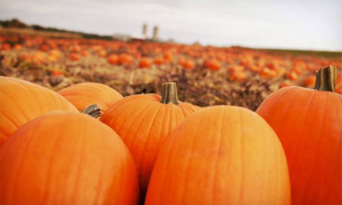 Wilstem Guest Ranch - Paoli, IN: $20 for Hayrides, Pumpkin Picking, and Family Activities for Four at Wilstem Guest Ranch ($40 Value)