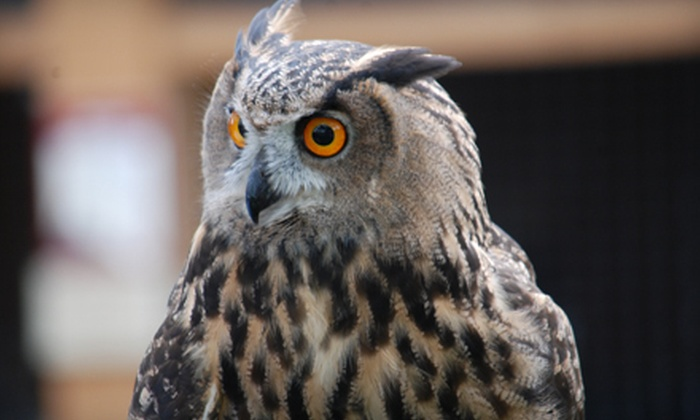 The Peregrine Fund's World Center for Birds of Prey - Boise: $15 for Four Passes and a $2 Donation to The Peregrine Fund's World Center for Birds of Prey ($30 Value)