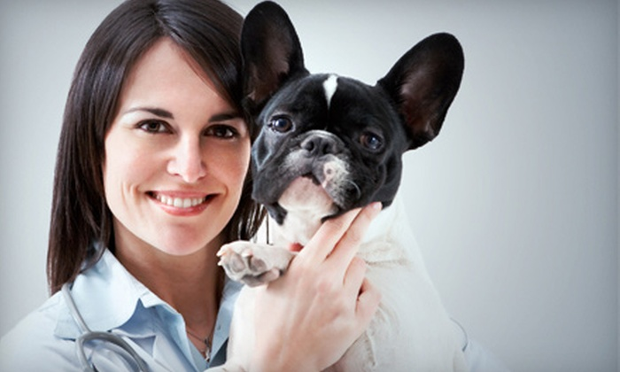 Ruby Hill Animal Therapy - New Tripoli: $28 for $50 Worth of Physical Therapy from Ruby Hill Animal Therapy
