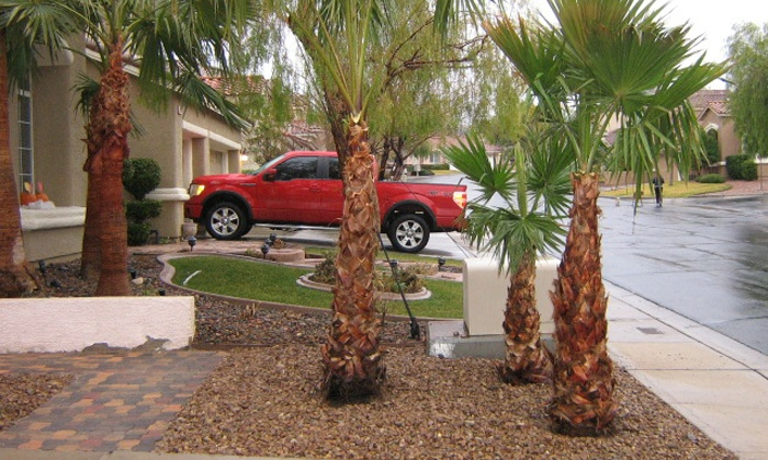 D & M Landscaping - Las Vegas: Trimming of Up to Five Palm Trees or Month of Weekly Landscape Maintenance from D & M Landscaping (Up to 53% Off)