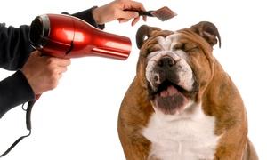 Petspa: Sesión de peluquería para perros de 5 a 30 kg desde 14 €