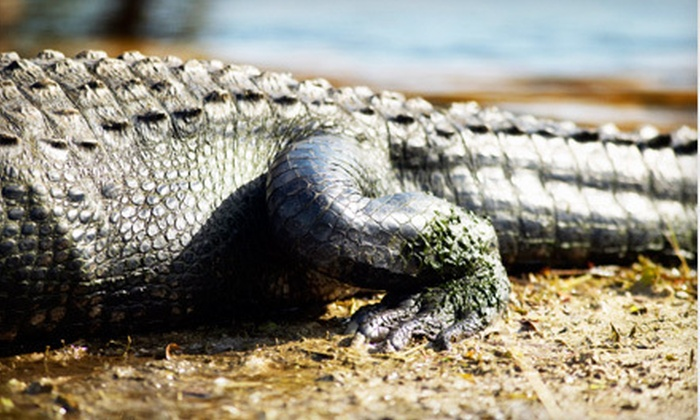 Kliebert's Turtle and Alligator Farm - Hammond: $12 for a One-Hour Tour for Two Adults at Kliebert's Turtle and Alligator Farm in Hammond ($24 Value)