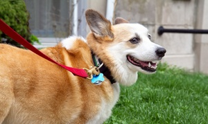 Dogs R Us: $65 for 10 Days of Dog Daycare at Dogs R Us ($140 Value)