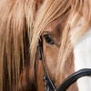 55% Off Private horseback riding lessons