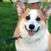 Up to 74% Off Dog Grooming at Groomer Has It