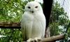 L'Oasi degli Animali - San Sebastiano da Po: Ingresso all'Oasi degli Animali per adulti o bambini