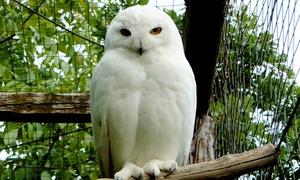 L'Oasi degli Animali: Ingresso all'Oasi degli Animali per adulti e bambini (sconto fino a 50%)