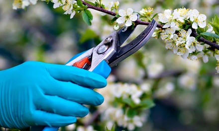 $15 for $30 Worth of Hardware, Trees, and Gardening Supplies at Houston Hardware & Garden Center