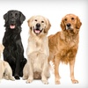 Up to 52% Off Dog Training at Zoom Room