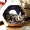 $19.99 for a FurHaven Cat Ball Sleep and Peek