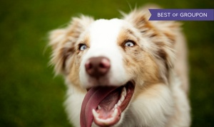 Millhopper Veterinary Medical Center: Vaccines or Pet Boarding at Millhopper Veterinary Medical Center (Up to 55% Off). Five Options Available.