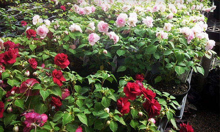 Howell's Dried Floral & Greenhouse - Cumming: $15 for $30 Worth of Annual and Perennial Potted Plants at Howell's Dried Floral & Greenhouse