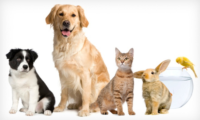 Kingston Pet Sitting Service - Sutton Mills: $22 for Three 20-Minute Dog Walks or Pet Visits from Kingston Pet Sitting Service ($45 Value)
