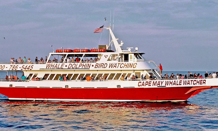 Cape May Whale Watcher - Lower: Dolphin-Watching Tour or Whale-and-Dolphin-Watching Tour for 1 or 2 from Cape May Whale Watcher (Up to 52% Off)