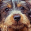 Up to 55% Off Pet Boarding or Vaccinations