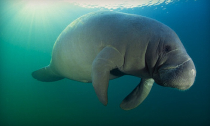 American Pro Diving Center - Crystal River: $30 for a Manatees Snorkel Tour from American Pro Diving Center in Crystal River (Up to $63.07 Value)