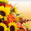 Half Off Flowers and Gifts in Ellicott City