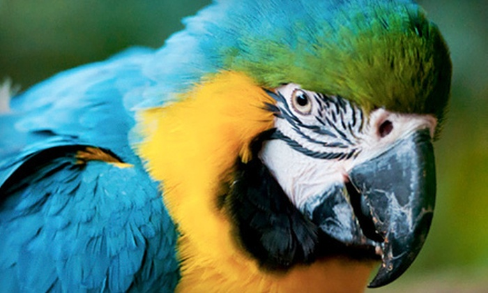 Tracy Aviary - Central City/ Liberty Wells: Nature Outing for Two Adults or Two Children at Tracy Aviary (Half Off)