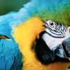 Half Off Tracy Aviary Visit for Two