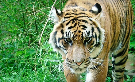Admission for 2 (a $12 value) - Akron Zoo in Akron