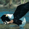 Up to 58% Off Eagle-Spotting Tour in Harrison Hot Springs