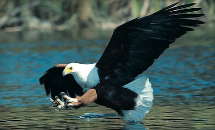 2-Hour Guided Eagle-Spotting Jet-Boat Tour for 2 (a $198 value) - Harrison Eco Tours in Harrison Hot Springs