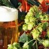 Three-Hour Beginner Beer-Making Class