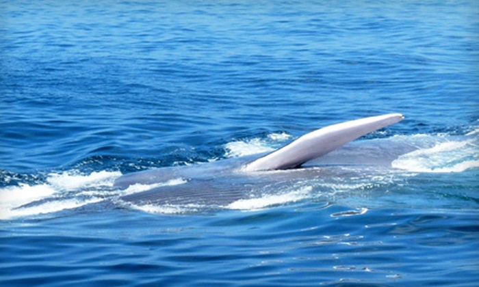 San Diego Whale Watch - San Diego : Three-Hour Whale-Watching Cruise for One or Two from San Diego Whale Watch (Up to 53% Off)