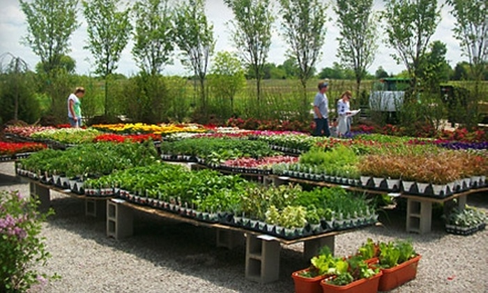 Narrow Tree Nursery - McCamish: $25 for $50 Worth of Roses, Shrubs, and Other Plants at Narrow Tree Nursery in Edgerton